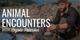 Animal Encounters | COYOTE PETERSON
